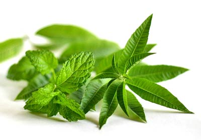 Mint Herb Benefits