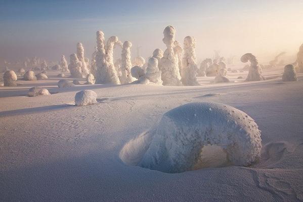 Frozen Trees of the Arctic