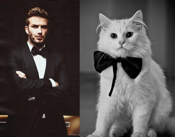 Handsome Guys And Cute Kittens
